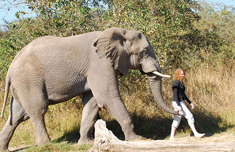 PageLines-Elephant-walk.jpg
