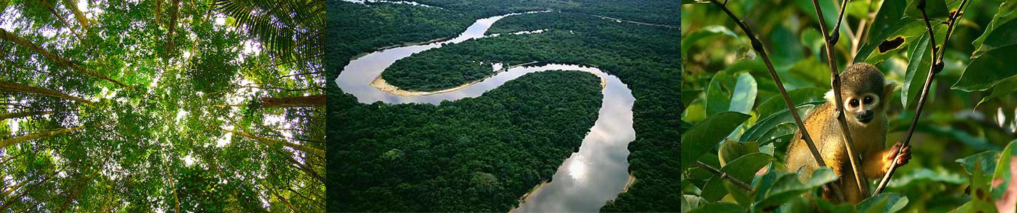 20100204-amazon-rainforest