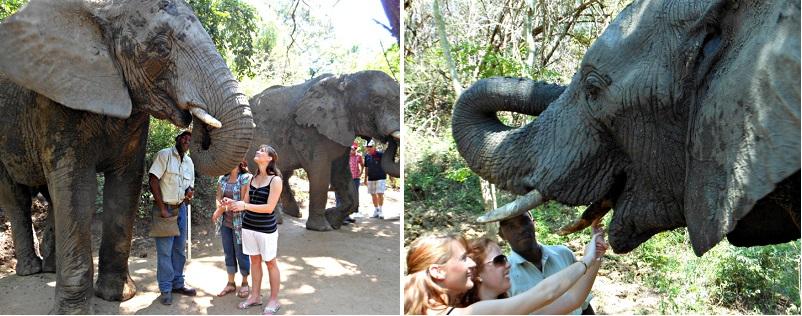 elephantsanctuary2