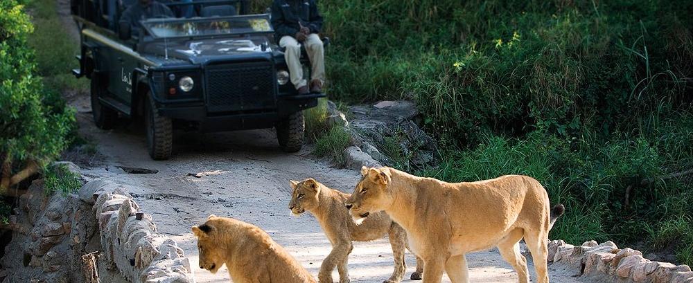 Kruger-National-Park-Lion-Safari